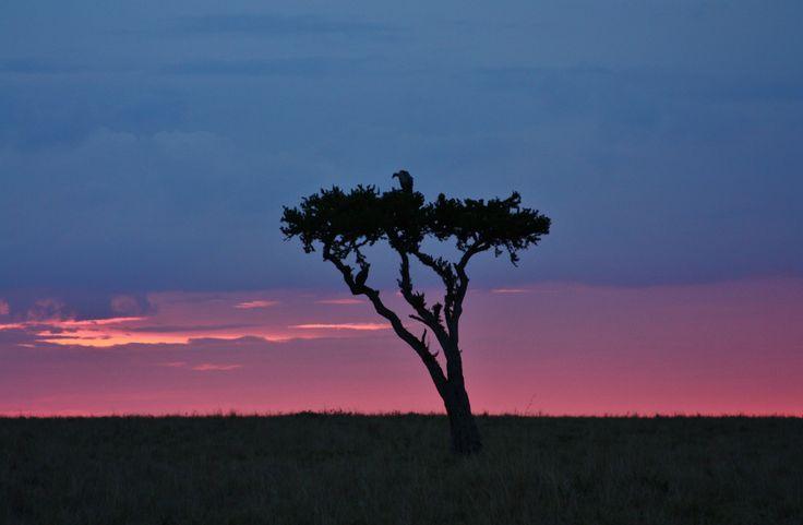 Фотография Sunset at Masai Mara автор Lukas Mappino на 500px