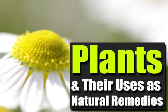 Plants and Their Uses as Natural Remedies