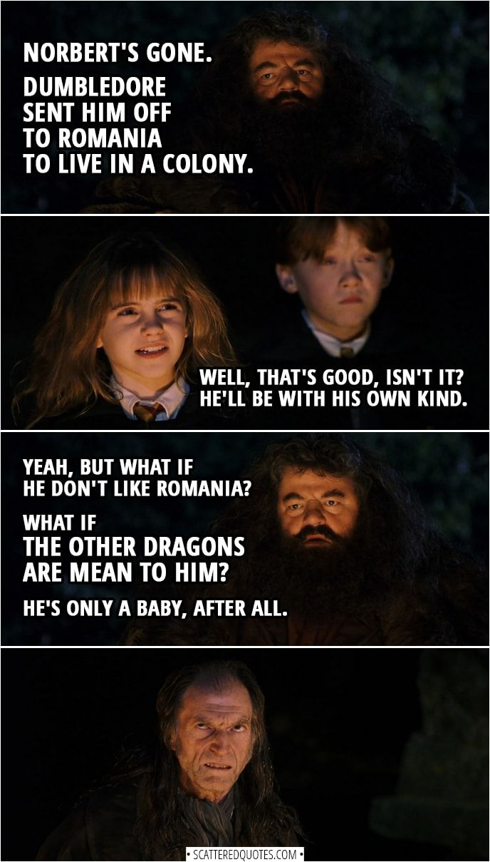 what if the other dragons are mean to him hagrid quotes harry