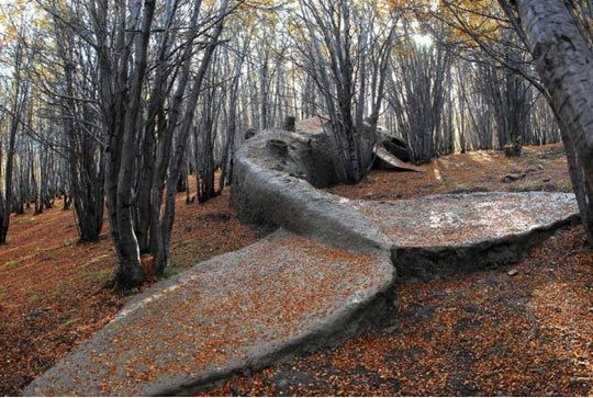 A hauntingly beautiful whale statue in the middle of the woods