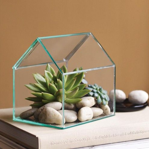 Glass House Terrarium Display Case | VivaTerra, approx. 6 x 5, $39