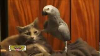 kediler ve papağanı - YouTube