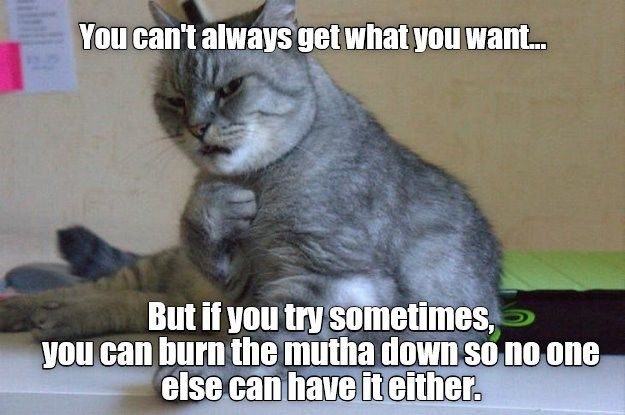 Words Of Wisdom Funny Cat Memes Silly Cats Words Of Wisdom