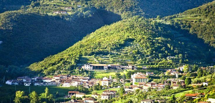 La Majolina è un vitigno autoctono a bacca rossa, che cresce soltanto in questa zona (Ome e Monticelli Busati) e che viene coltivato tuttora dalla famiglia. http://www.excantia.com/majolini/