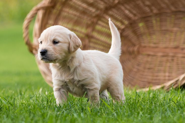 Fake Grass for Dogs Cheap - Artificial Grass Recyclers