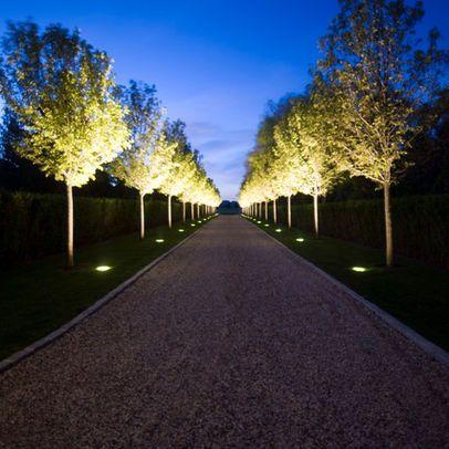 Uplighting Along Pathway Under The Sky Trees