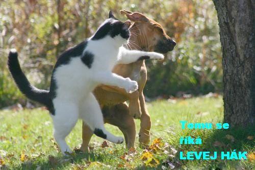 vtipné obrázky zvierat - Hledat Googlem
