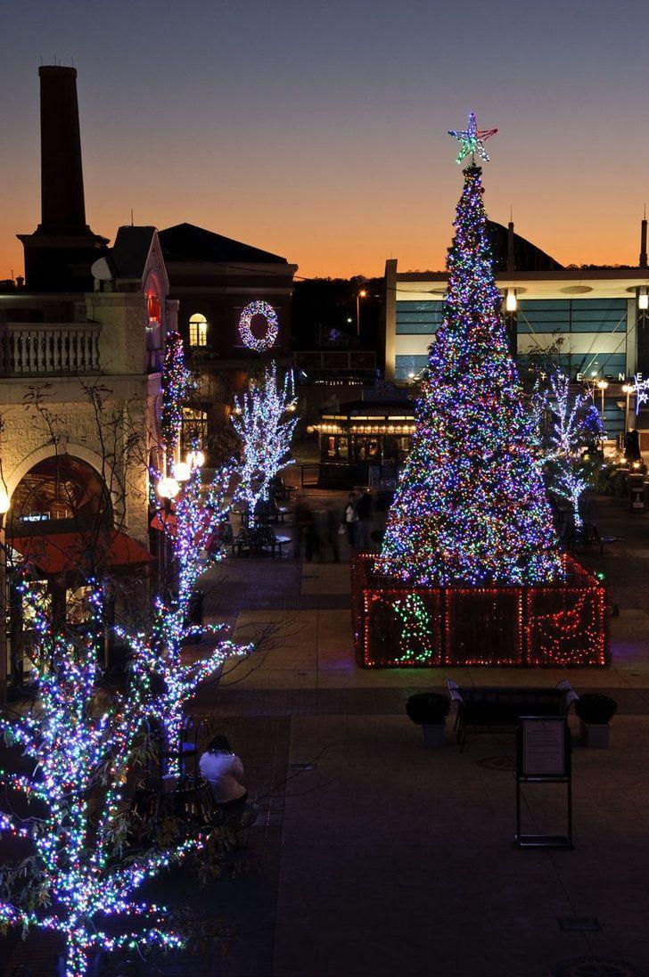 26 Best Christmas In Newport RI Images On Pinterest Newport  - Christmas Trees Ri