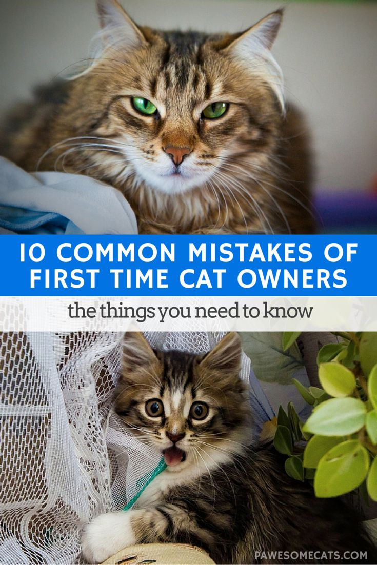 There's much more to owning a cat than providing cardboard boxes to play in | 10 Common Mistakes of First Time Cat Owners