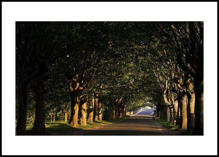 Réduire la vitesse autorisée, baisser l'alcoolémie tolérée et pourquoi pas… planter des arbres. L'allée de platanes longtemps jugée coupable d'encastrements pourrait désormais rimer avec sécurité. Depuis une quinzaine d'années, des ingénieurs français planchent, au sein du Centre d'étude et d'expertise sur les risques, l'environnement, la mobilité et l'aménagement (Cerema), sur l'utilisation du paysage pour modifier le comportement de l'automobiliste.Au Royaume-Uni, le comté de Norfolk a mis…