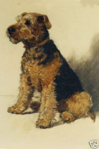 This is my dog!  Welsh Terrier