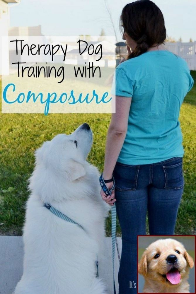 House Training A Puppy At Night And Dog Training Courses Uk Online