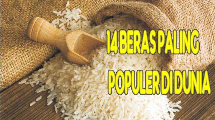 beras paling populer di dunia