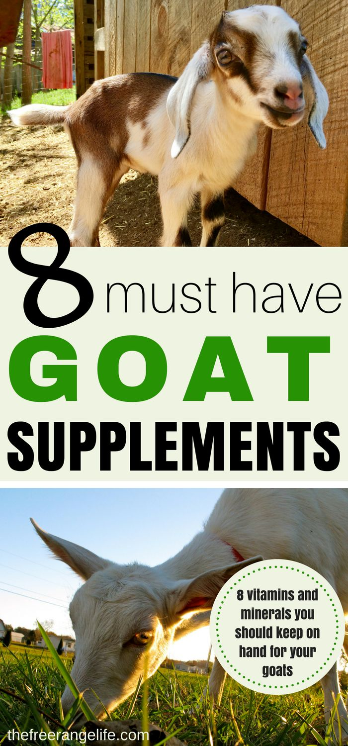 When raising goats keep these 8 must have nutritional supplements for goats on hand in your barn or medicine cabinet. Your goats will be happier and healthier and in top condition.