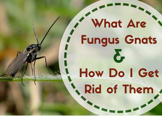 How To Get Rid Of Small Flying Bugs Inside