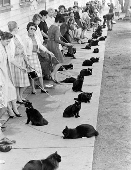 Cats abound!