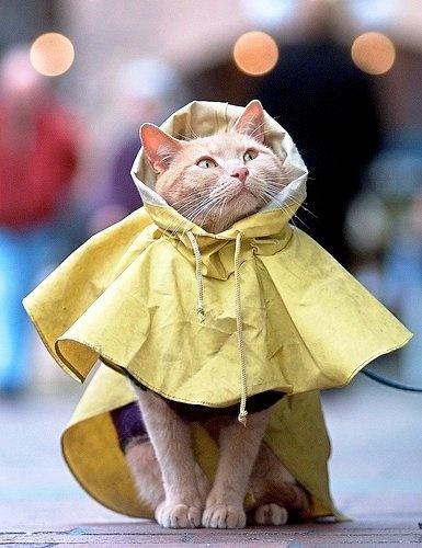 kitty fashion: Rain Coat Edition.