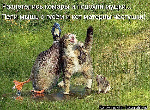 Разлетелись комары и подохли мушки...  Пели мышь с гусём и кот матерны частушки!...