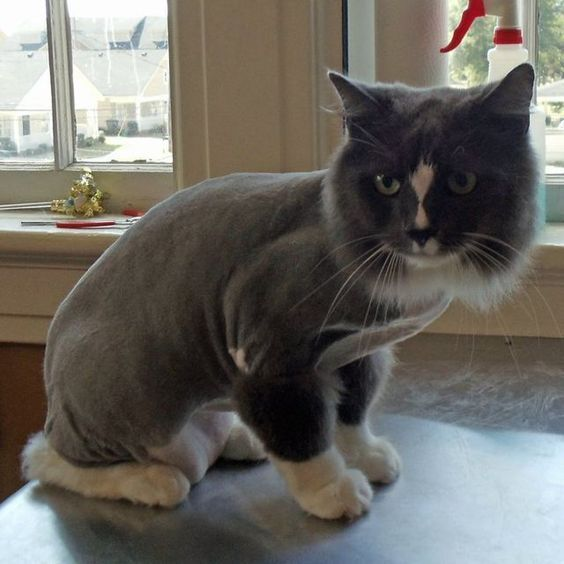 Shaving Long Haired Cats In The Summer