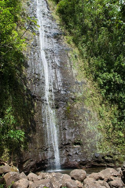 Manoa Fall  - easy hike
