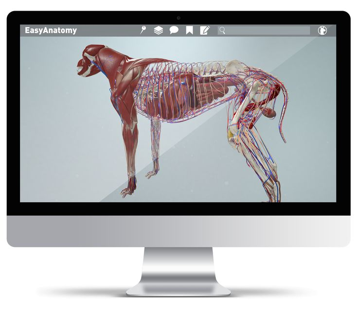 EasyAnatomy is an interactive, virtual 3D canine anatomy study app, that makes veterinary students' studies more engaging, convenient and easy.