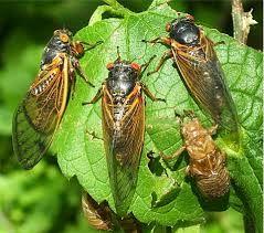 A year of milestones, and cicadas