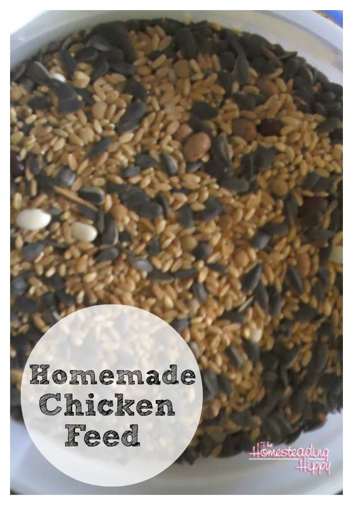 Save money on chicken feed for your small flock by making your own.  Here's my recipe for homemade chicken feed~The Homesteading Hippy #homesteadhippy #theurbanchicken #fromthefarm