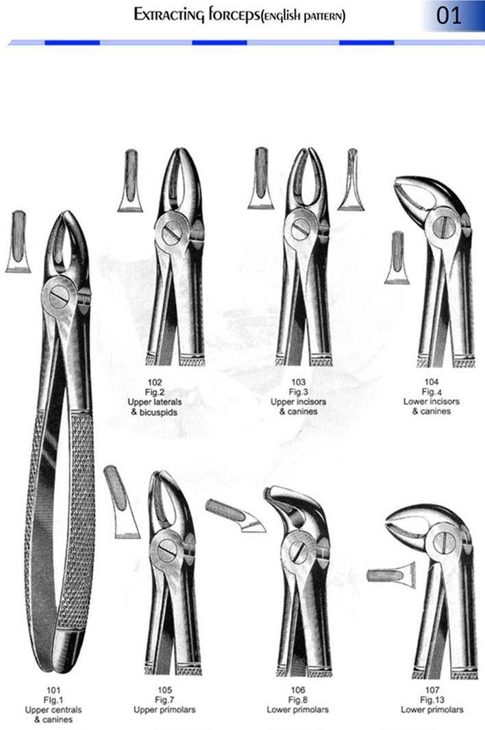 94 best Dental Studies images on Pinterest | Dental, Dentistry and Tooth