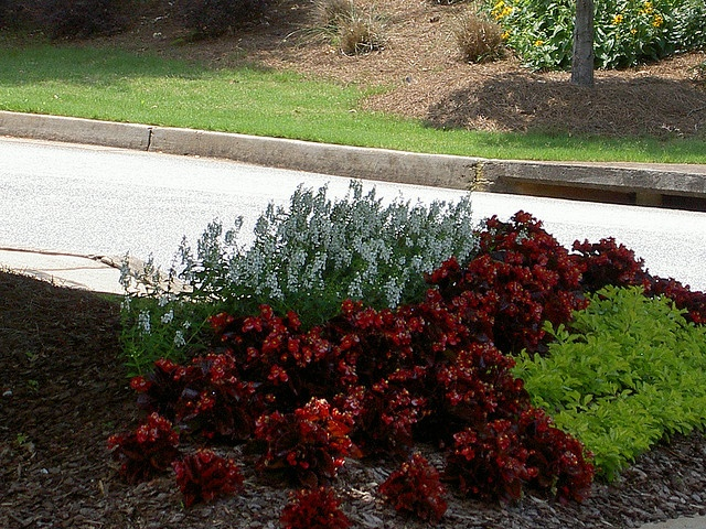 20 best images about low maintenance shade flower bed on for Low maintenance plants for garden beds