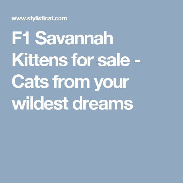 F1 Savannah Kittens for sale - Cats from your wildest dreams