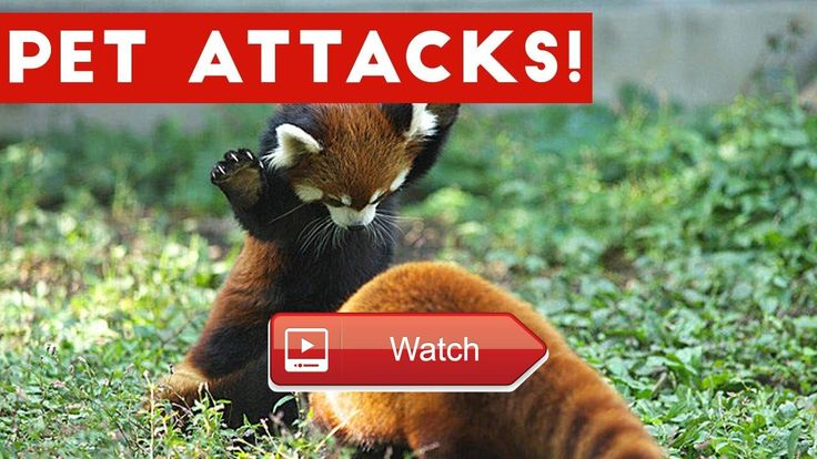 😸 Funniest Animal Attacks Compilation April Funny Pet Videos 🐶 Brand new weekly compilation featuring the funniest animal attack clips…