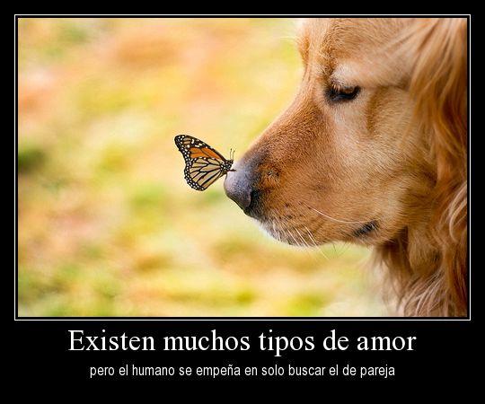 """""""Existen muchos tipos de amor pero el humano se empeña en solo buscar el de pareja"""""""