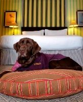 Maverick At Hotel Palomar San Francisco Dog Friendly