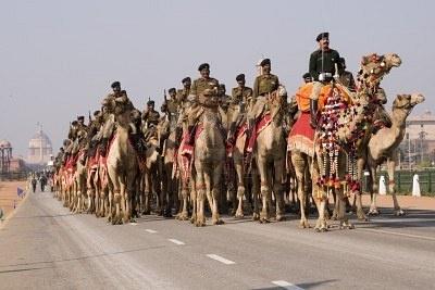 Les chameaux du Corps de l'armée indienne Camel parader sur le chemin Raj en préparation pour le défilé de la fête République, New Delhi, Inde. Janvier 20, 2008