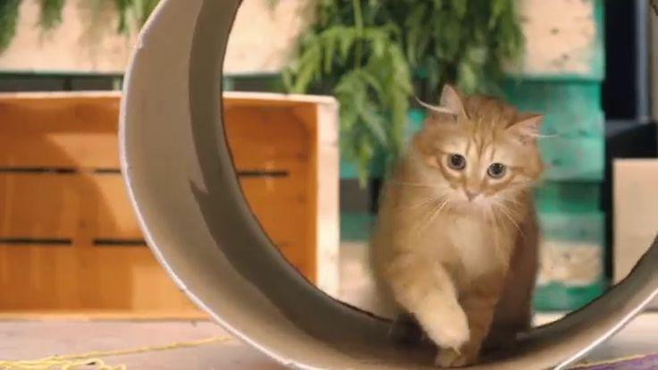 Cats' Land. Dal loro punto di vista - Almo Nature