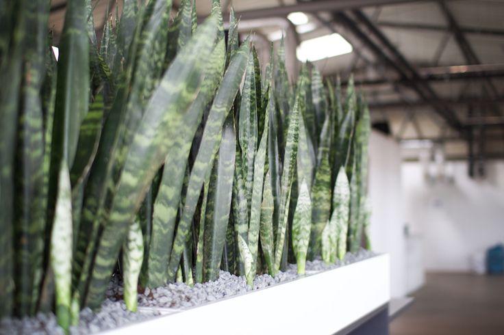 appcom marketing & interactive   office plants   office interior design