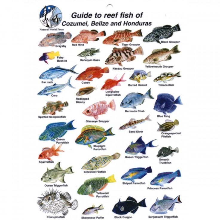 76 best images about fish chart on pinterest fish chart for Best places to fish in the us