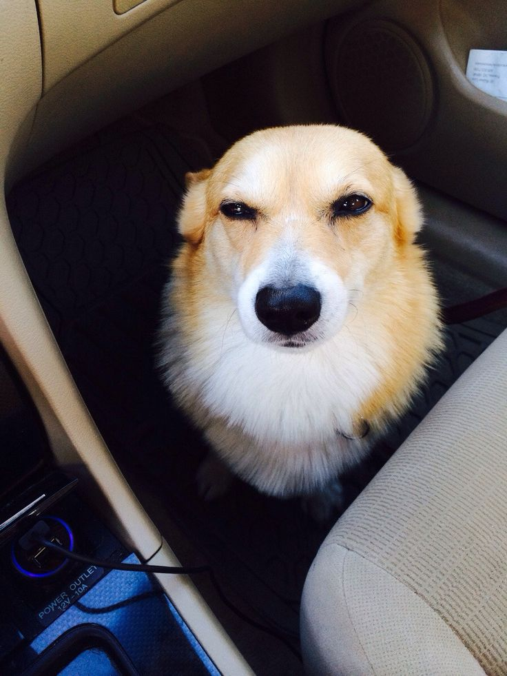 You said we were going to the PARK...I smell the Vet.