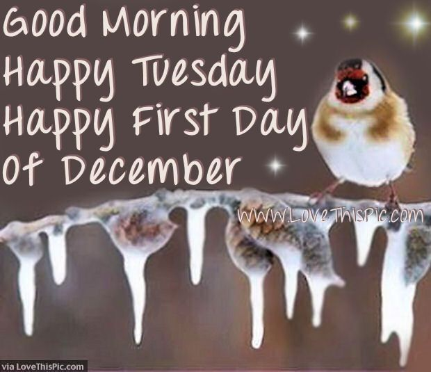 Good Morning Happy Tuesday Happy First Day Of December good morning december december quotes tuesday tuesday quotes hello december happy december hello december quotes goodbye november december quote goodbye november hello december good morning december quotes