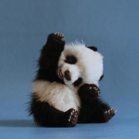Panda babies are just naturally cute, but this one is a prize winner.
