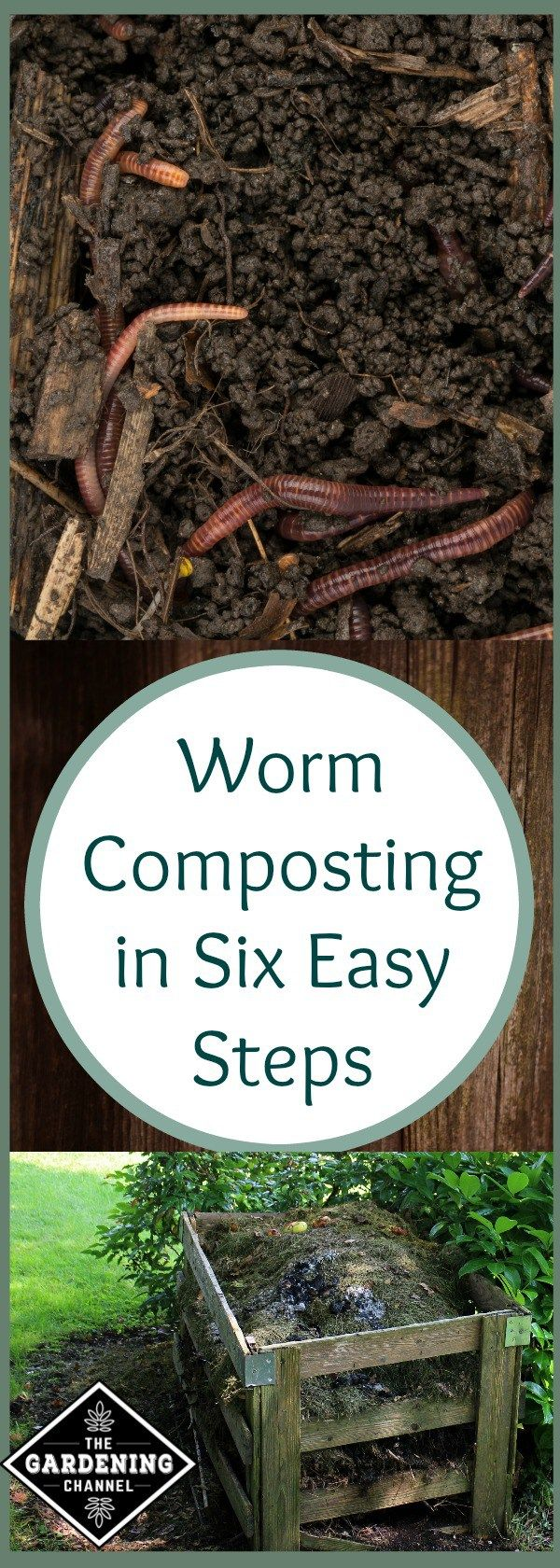 Worm composting can improve the quality of your soil and make your vegetable garden better than ever.  See how to do it in 6 easy steps