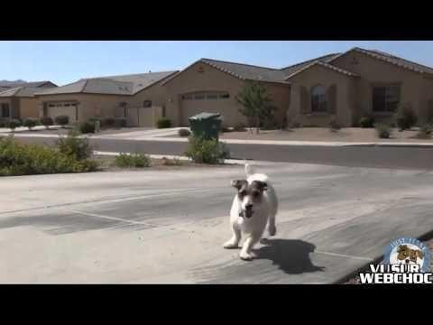 Jesse, un chien qui vous fait tout dans la maison