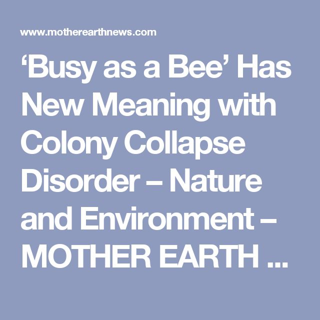 'Busy as a Bee' Has New Meaning with Colony Collapse Disorder – Nature and Environment – MOTHER EARTH NEWS