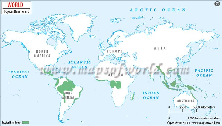 World Map showing the tropical rainforest locations around the world