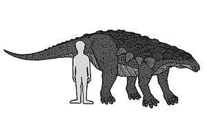 Op deze link naar wikikids vind je al de verschillende dinosaurussoorten en de uitleg ervan. Hier vind je al de dinosaurussen die ooit bestaan hebben en ooit gevonden zijn.