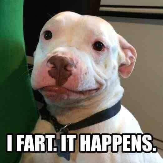 visit www.amazingdogtales.com for the best funny dog joke pics,inspirational dog stories and dog news.... I farted meme dog meme…