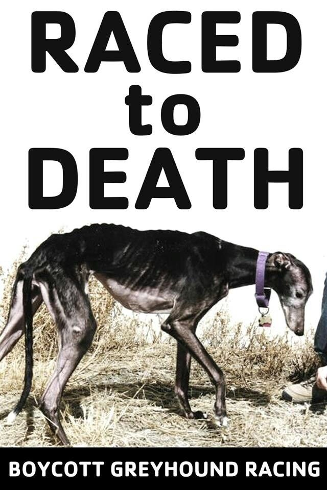 the fight against animal cruelty and the killing of greyhounds Thousands of greyhounds are killed or injured by the cruel racing industry  opposition is  join the aspca in the fight against animal cruelty today donate .