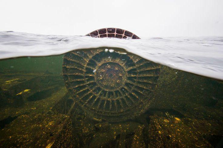 Vedenalainen kuvaus, luontokuvaus | Littoinen | Kuvastaja Oy