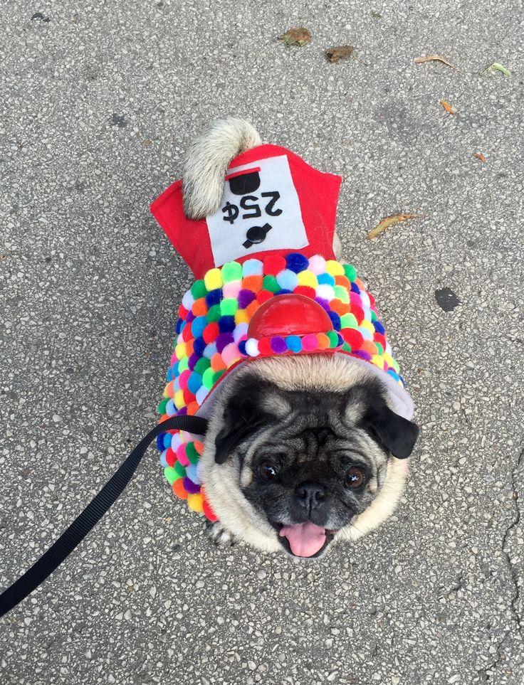 Best 25+ Diy dog costumes ideas on Pinterest | Dog ...