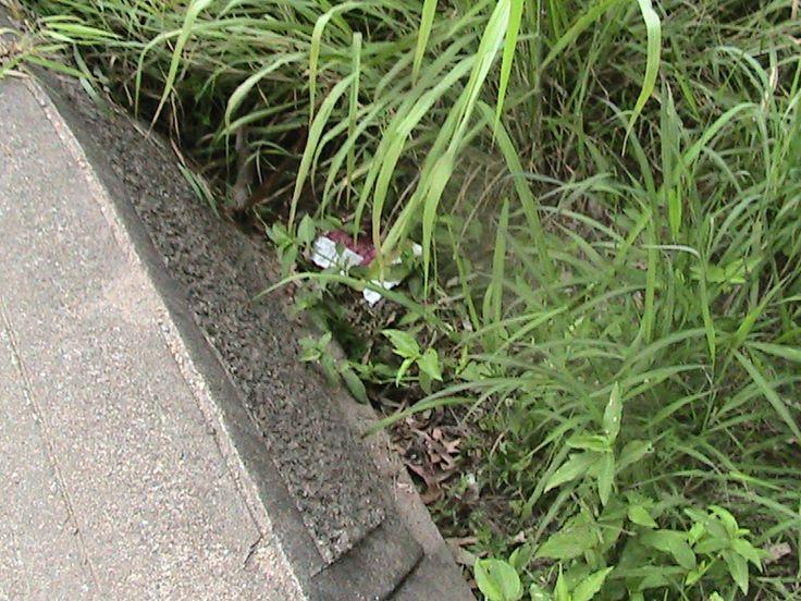 Dorrington park - litter